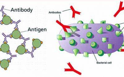 واکنش آنتی ژن وآنتی بادی